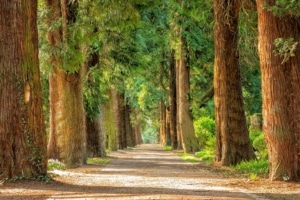 Waldweg-zum-Reden