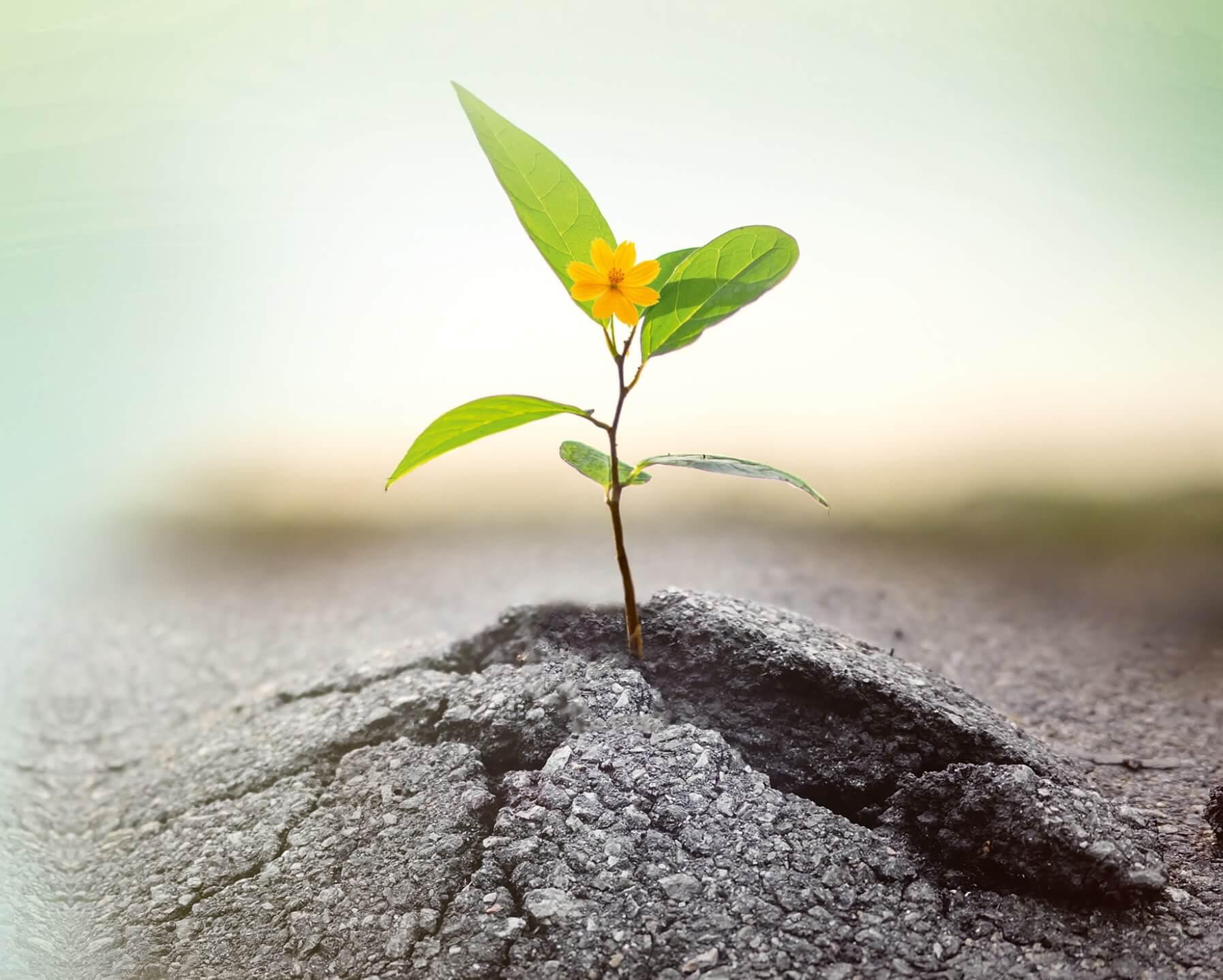Resilienztraining